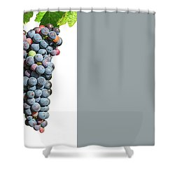 Grapes On Vine Shower Curtain