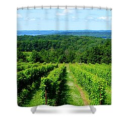 Grapevines On Old Mission Peninsula - Traverse City Michigan Shower Curtain by Michelle Calkins