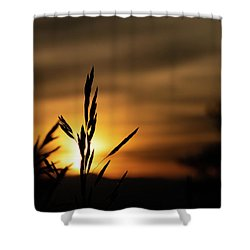 Grass At Sunset Shower Curtain