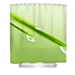 Grass Blades With Water Drops Shower Curtain by Elena Elisseeva