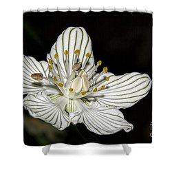 Grass Of Parnassus Shower Curtain