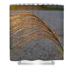 Grassflowers In The Setting Sun Shower Curtain by Douglas Barnett