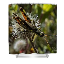 Grasshopper 1 Shower Curtain
