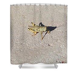 Grasshopper Curiosity Shower Curtain