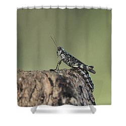 Grasshopper Great River New York Shower Curtain by Bob Savage