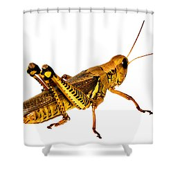 Grasshopper I Shower Curtain by Gary Adkins