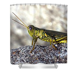 Grasshopper Shower Curtain by Joseph Skompski