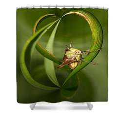 Shower Curtain featuring the photograph Grasshopper by Jouko Lehto