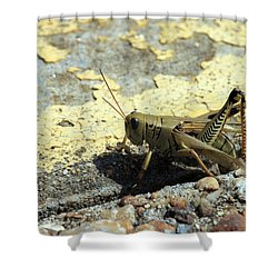 Grasshopper Laying Eggs Shower Curtain