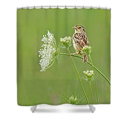 Grasshopper Sparrow Shower Curtain