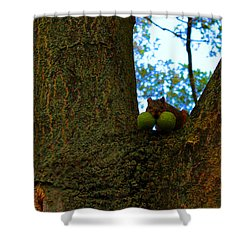 Shower Curtain featuring the photograph Grateful Tree Squirrel by Michael Rucker