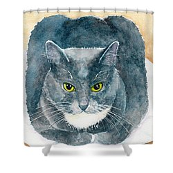 Gray And White Cat With Green Eyes Shower Curtain