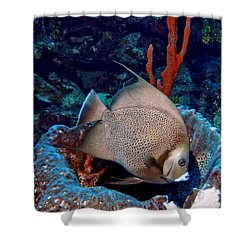 Gray Angel Fish And Sponge Shower Curtain