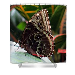 Gray Cracker Butterfly Shower Curtain by Betty Buller Whitehead
