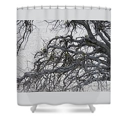 Gray Day At The Lake - Bare Branches 2 Shower Curtain by Brooks Garten Hauschild