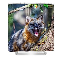 Gray Fox Awakens In The Tree Shower Curtain