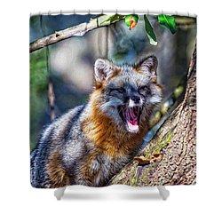 Gray Fox Awakens In The Tree Shower Curtain