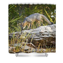 Gray Fox Hunting The Bluff Shower Curtain by Michael Dougherty