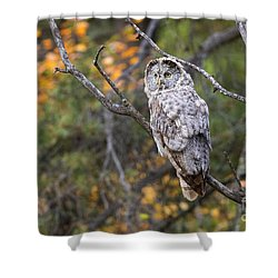 Gray In Fall Color Shower Curtain