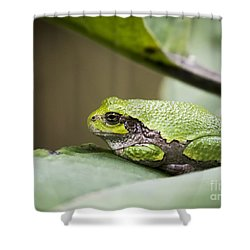 Shower Curtain featuring the photograph Gray Tree Frog - North American Tree Frog by Ricky L Jones