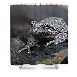 Gray Treefrog On A Log Shower Curtain
