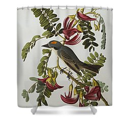 Gray Tyrant Shower Curtain by John James Audubon