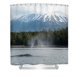 Gray Whale, Mount Edgecumbe Sitka Alaska Shower Curtain