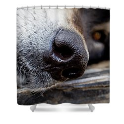Shower Curtain featuring the photograph Gray Wolf Nose by Teri Virbickis