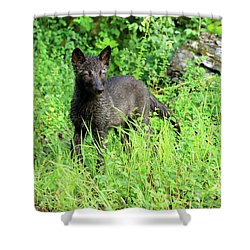Gray Wolf Pup Shower Curtain by Louise Heusinkveld