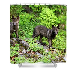 Gray Wolf Pups Shower Curtain by Louise Heusinkveld