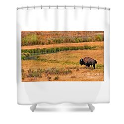 Shower Curtain featuring the photograph Grazing Bison And Stream by Clare VanderVeen