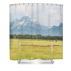 Grazing Bison Shower Curtain