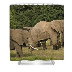 Grazing Elephants Shower Curtain by Gary Hall