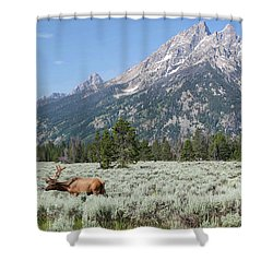 Grazing Elk In Grand Teton National Park Shower Curtain