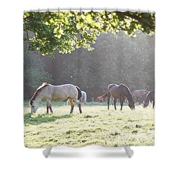 Shower Curtain featuring the photograph Grazing by Gary Bridger