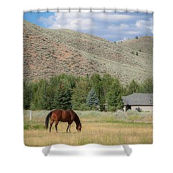 Grazing Horse Shower Curtain
