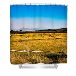 Shower Curtain featuring the photograph Grazing Horses by Cathy Donohoue