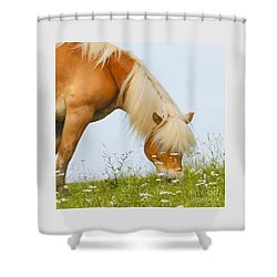 Grazing In The Daisies Shower Curtain