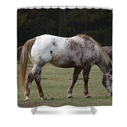 Shower Curtain featuring the photograph Grazing Time by Kim Henderson