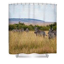 Grazing Zebras Shower Curtain