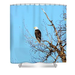 Great American Bald Eagle Shower Curtain by Adam Cornelison