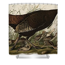 Great American Hen And Young Shower Curtain by John James Audubon