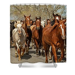 Shower Curtain featuring the photograph Great American Horse Drive by Brenda Jacobs