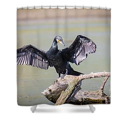 Great Black Cormorant Drying Wings After Fishing Shower Curtain