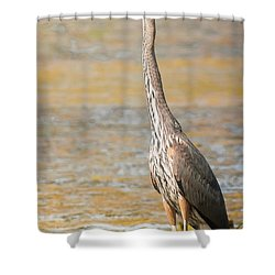 Great Blue At The Flats Shower Curtain by Robert Frederick