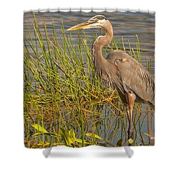 Great Blue At The Park Shower Curtain