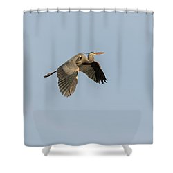 Shower Curtain featuring the photograph Great Blue Heron 2015-15 by Thomas Young