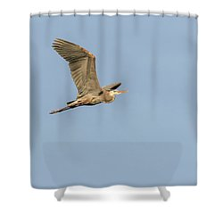 Shower Curtain featuring the photograph Great Blue Heron 2015-17 by Thomas Young