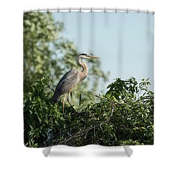 Shower Curtain featuring the photograph Great Blue Heron  2015-18 by Thomas Young