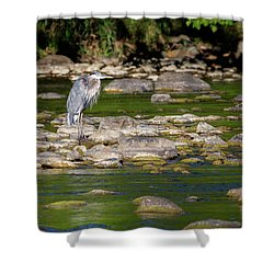 Great Blue Heron 2016 Shower Curtain by Bill Wakeley